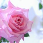 韓国ドラマ「ロマンスが必要」