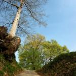 韓国ドラマ「根の深い木」