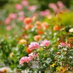 韓国ドラマ「天上の花園」