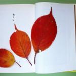 韓国ドラマ「秋の童話」